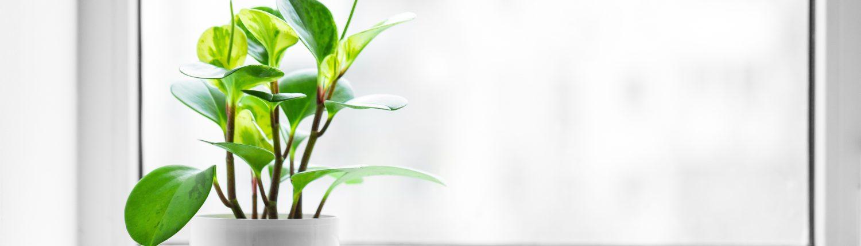 Um die Luftfeuchtigkeit zu regulieren, empfiehlt Tipp zum Bau regelmäßiges Stoßlüften.