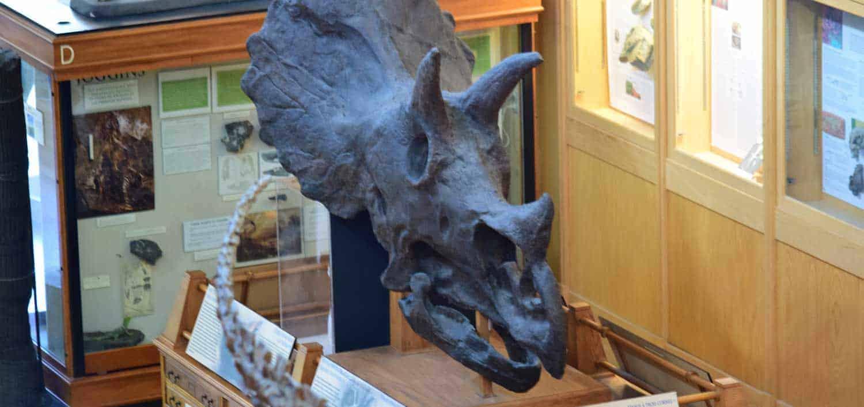 Dinosaurs Museum Montreal