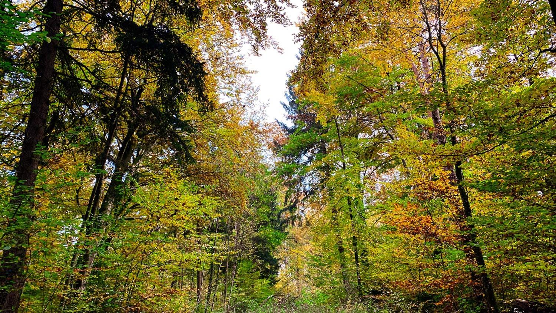 Photographie - Herbst - Wald - Blätter