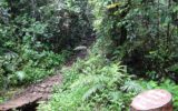 visit_sinharaja_06189