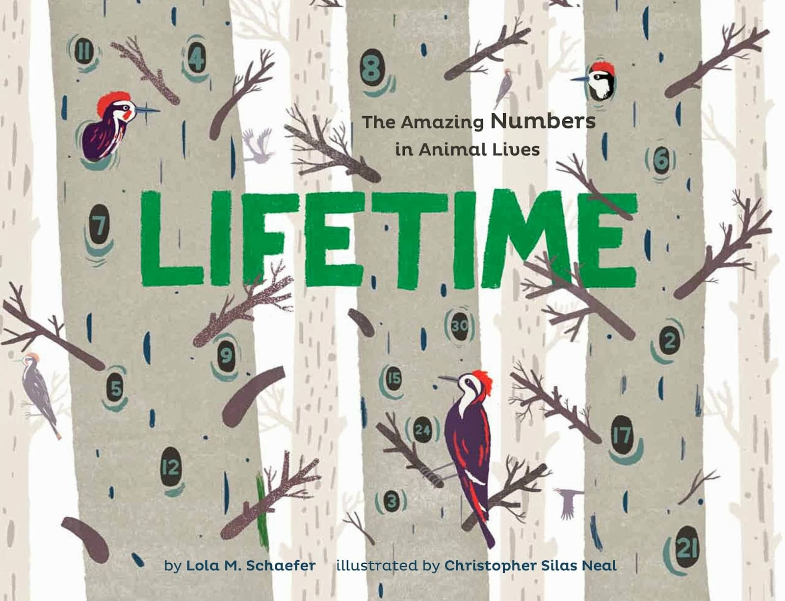 Lifetime: The Amazing Numbers in Animal Lives By Lola M. Schaefer