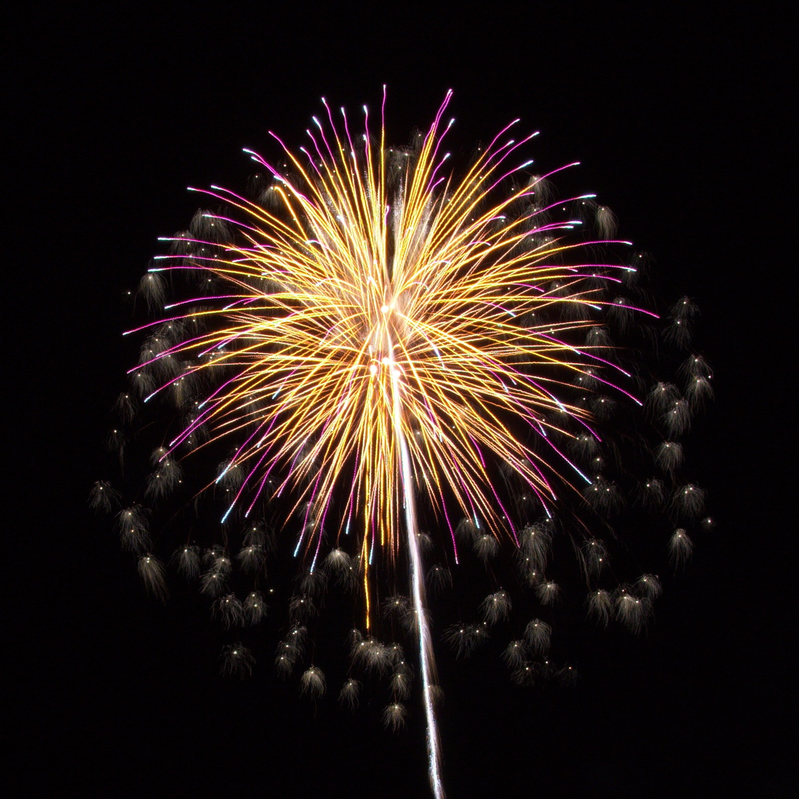 Cape Cod Fireworks: Yellow and purple