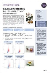 Potato Pollen Viability and Developmental Stages