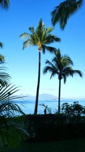 Two palm tree silhouettes by the ocean in Tahiti