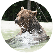 Huggy Russian Brown Bear