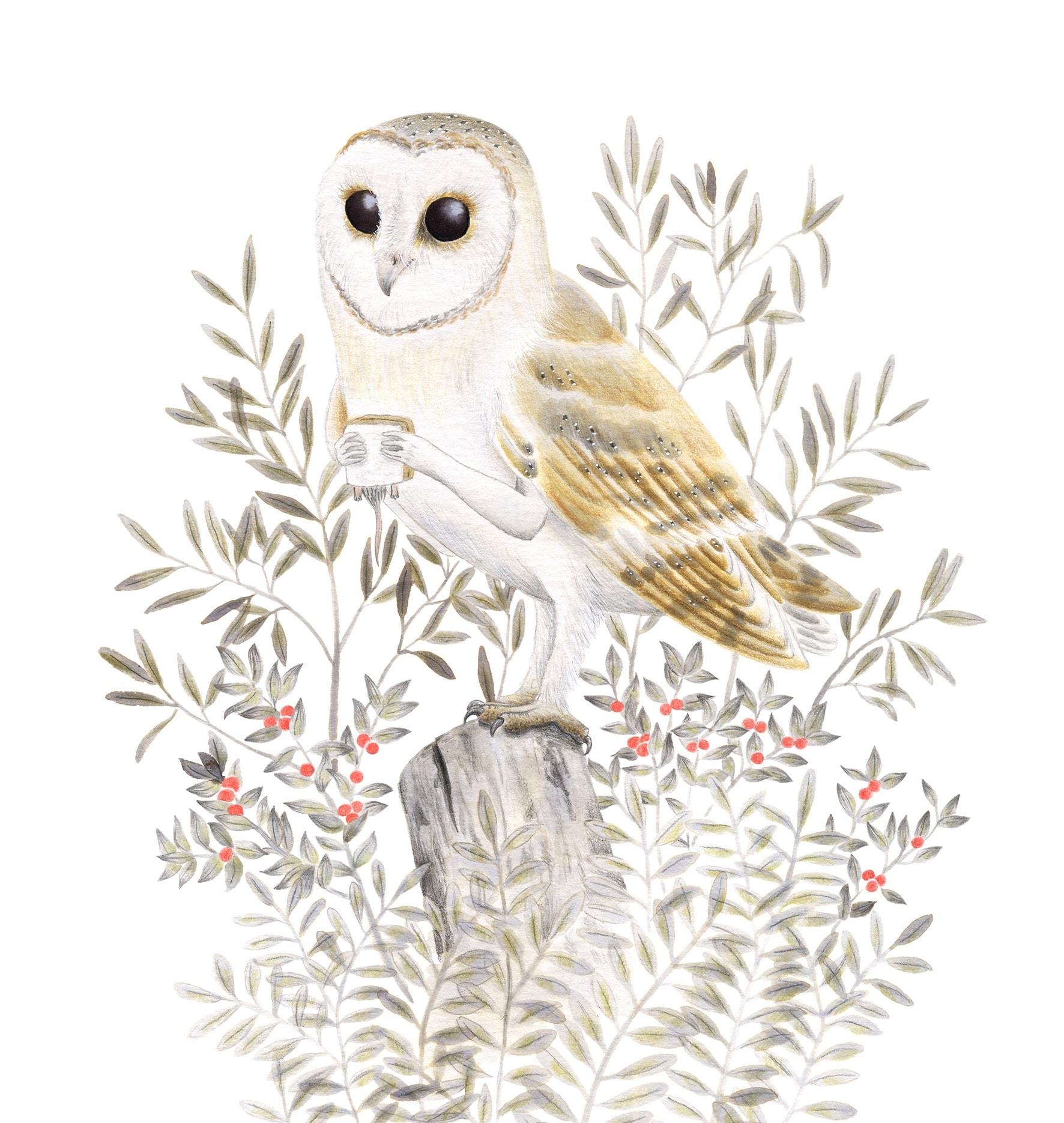 Lechuza común, Tyto alba, ilustración de aves, ilustración de lechuza, dibujo de lechuza, barn owl, owl illustration, lechuza comiendo, ilustración de naturaleza, ilustración de animales, ilustración de rapaces nocturnas,
