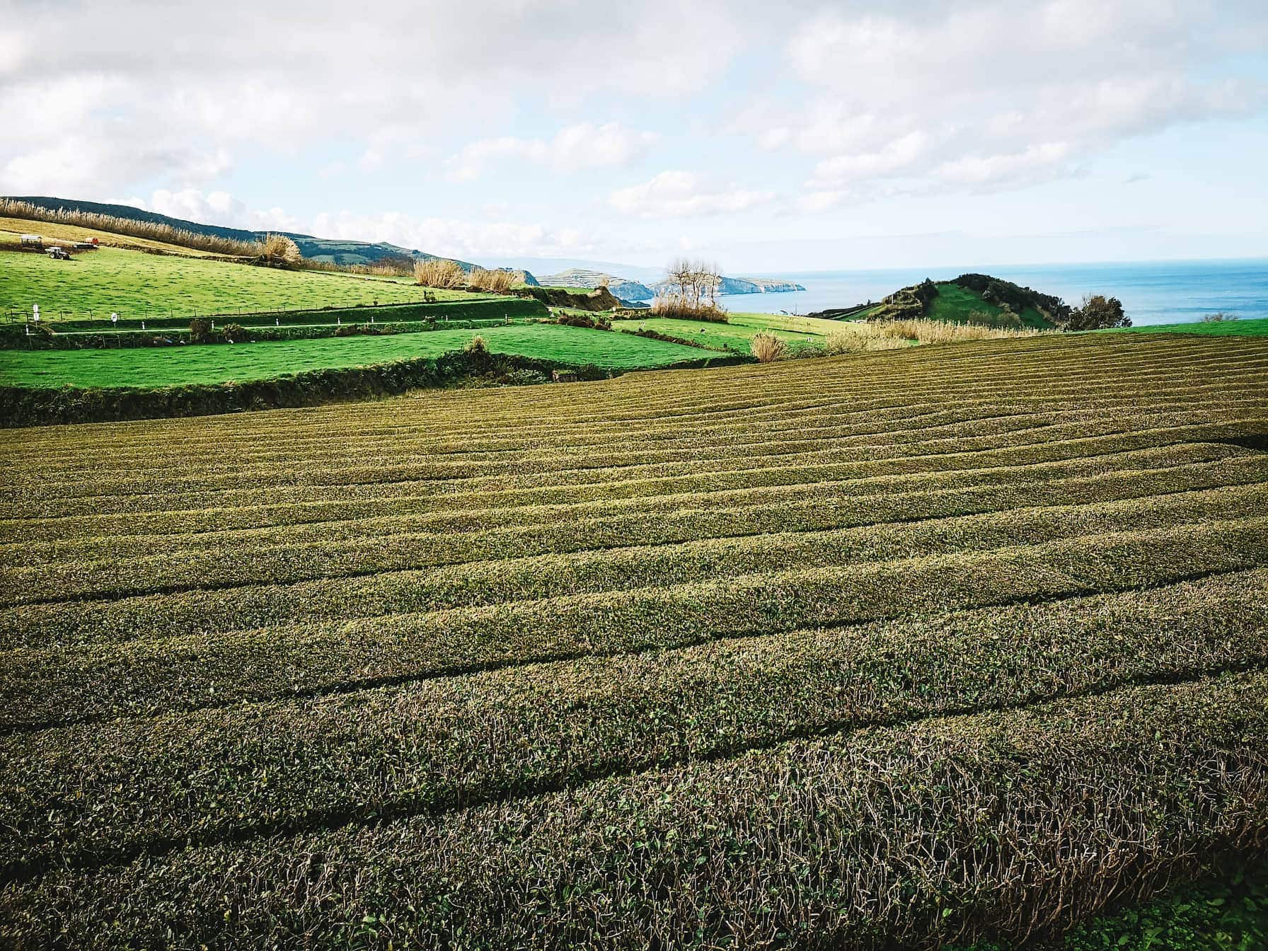 20 Unmissable Things To Do On São Miguel Island, Azores - Sao Miguel Tea Plantation
