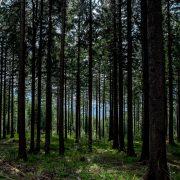 der Thüringer Wald