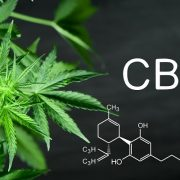 Top Six CBD Brands Derived from HEMP