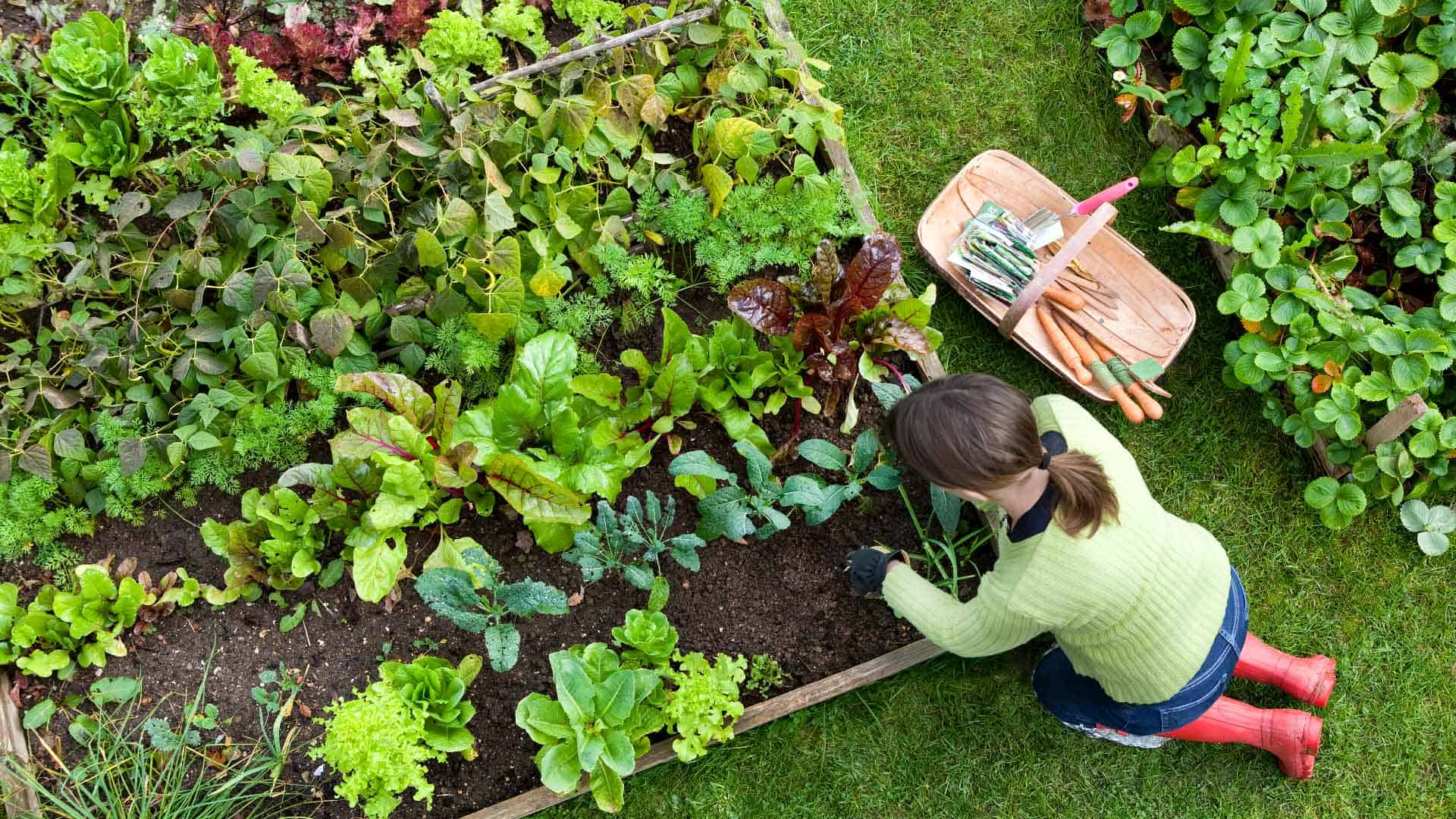 Woman planting in raised bed vegetable garden.