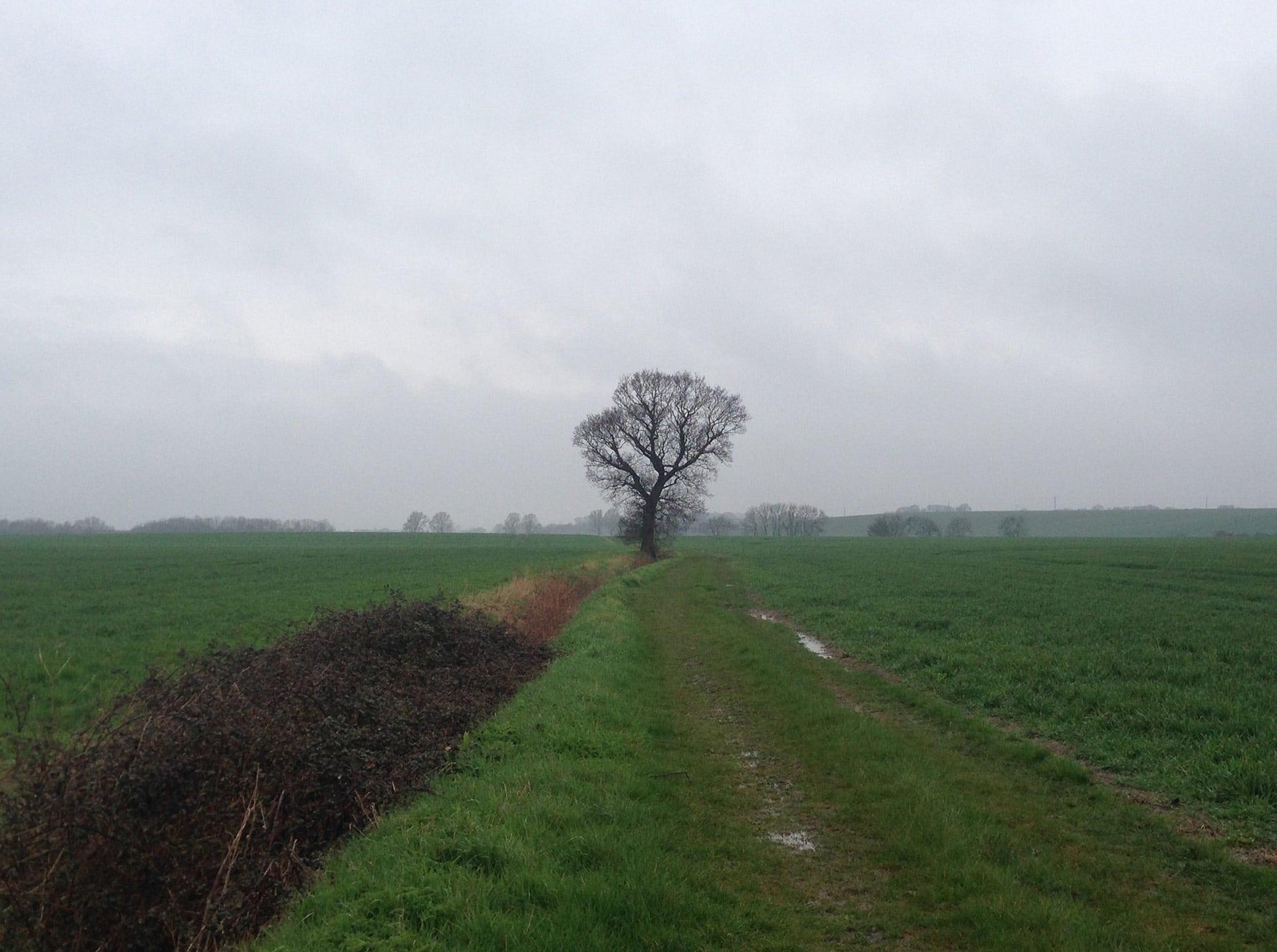 #treetwoproject