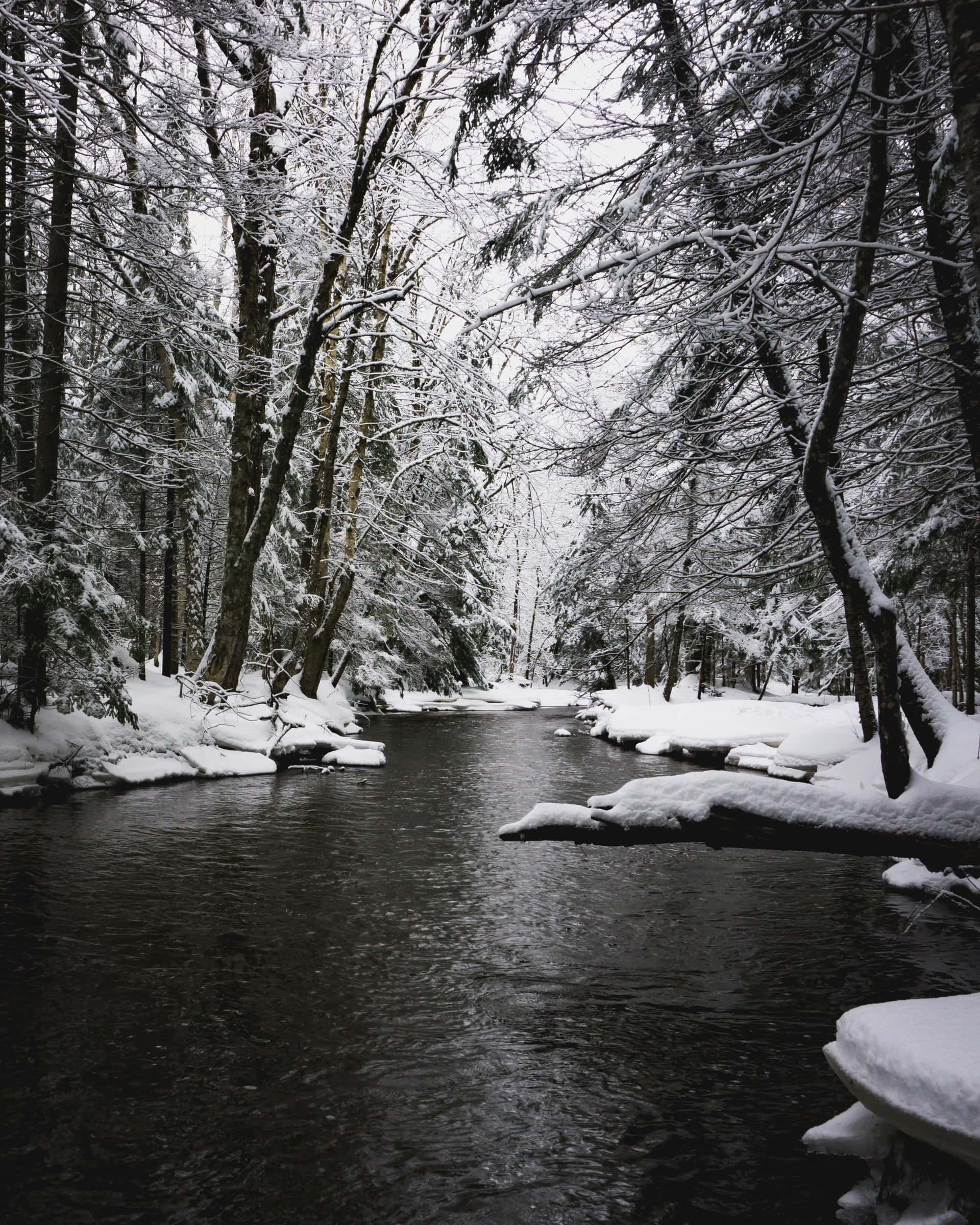 snowy forest river