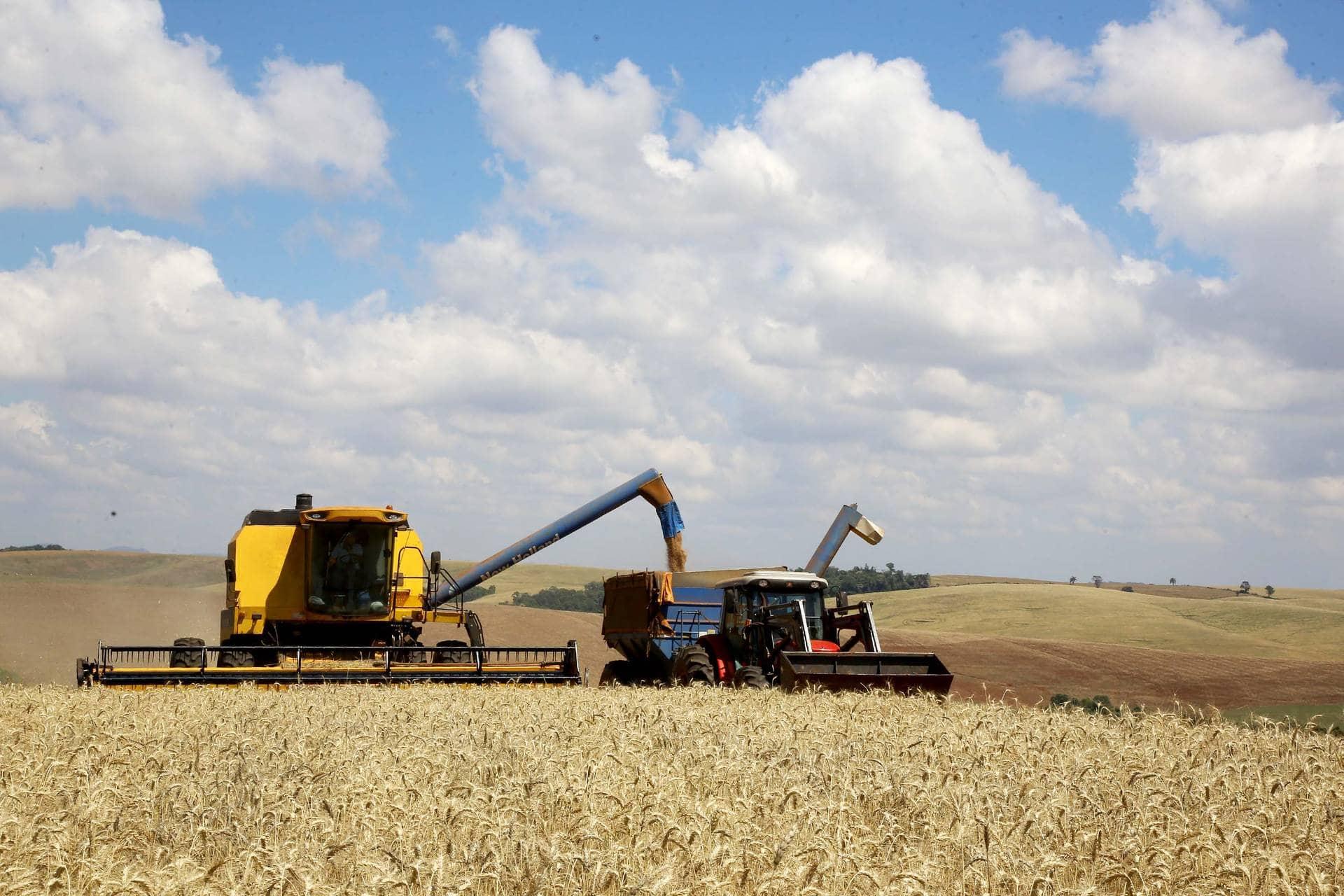 Plantio está quase concluído. A estiagem e o calor de setembro e outubro podem provocar ainda algum impacto na produtividade, prevê Secretaria da Agricultura e do Abastecimento.