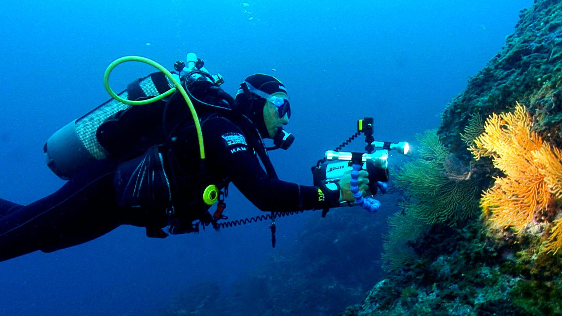 cameraman sous-marin