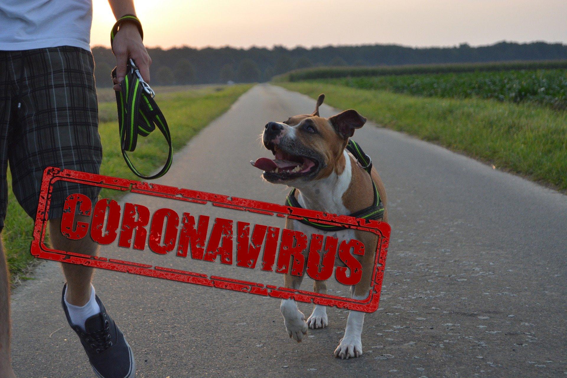 Quarantäne mit Hund: Was geschieht bei Corona-Infezierung mit meinem Hund?