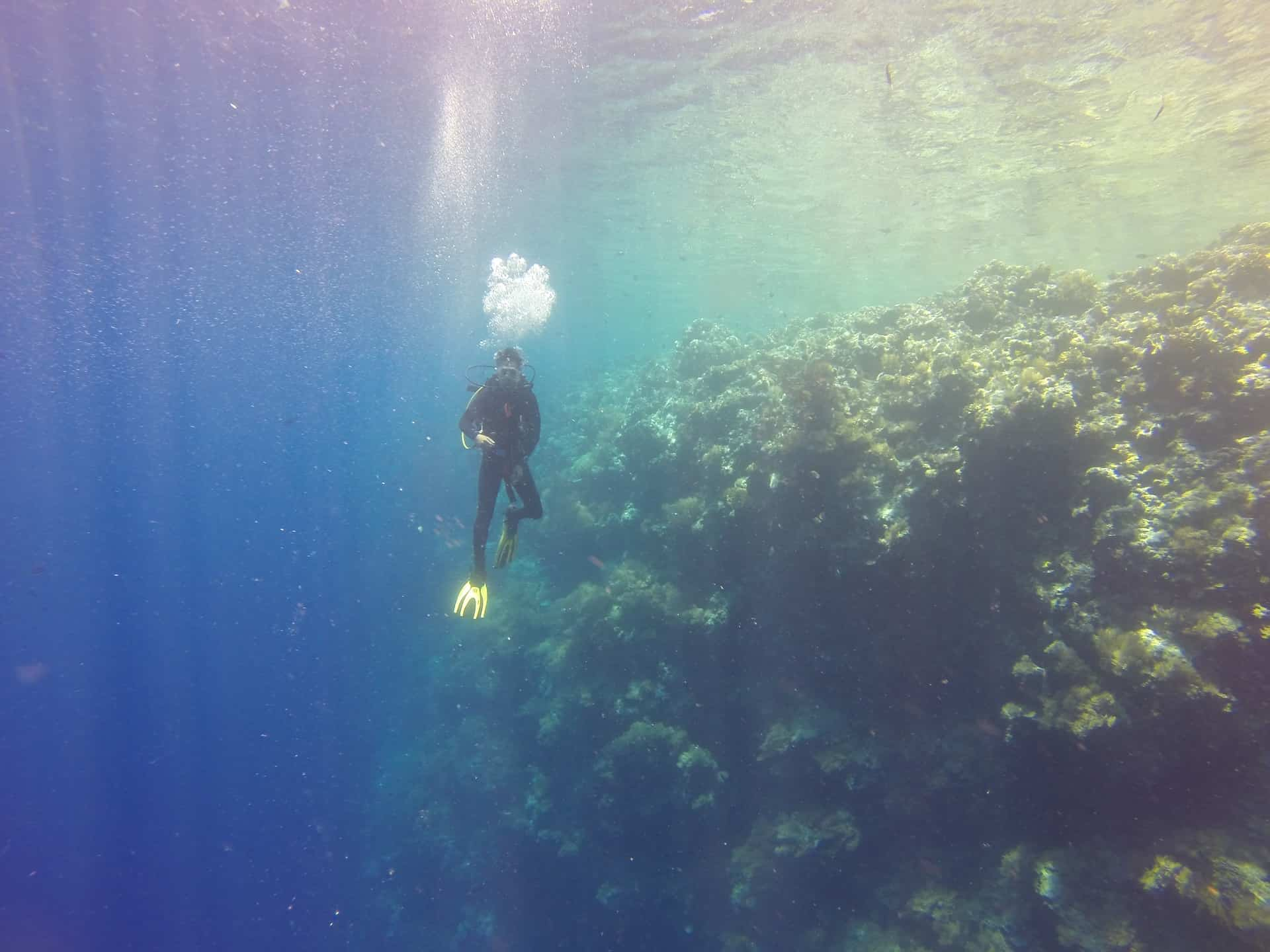 Partial Pressure and Diving