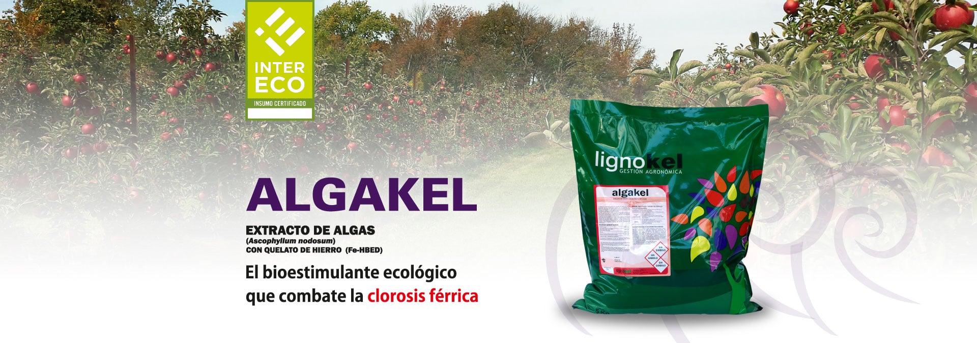 slide algakel