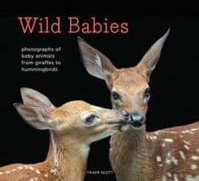 Must-Read NonFiction for Kids Wild Babies- Photographs of Baby Animals from Giraffes to Hummingbirds