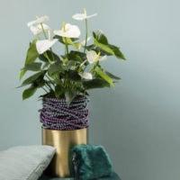 Samora Anthurium in een mooie gouden pot - Amazone Plants