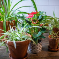 Amazone Plants (14)