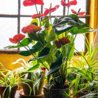 Amazone Plants 15