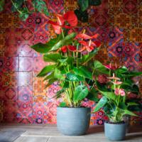 Amazone Plants (2)