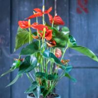 Amazone Plants (4)