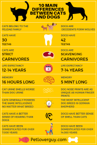 10 Main Differences Between Cats And Dogs (Infographic)
