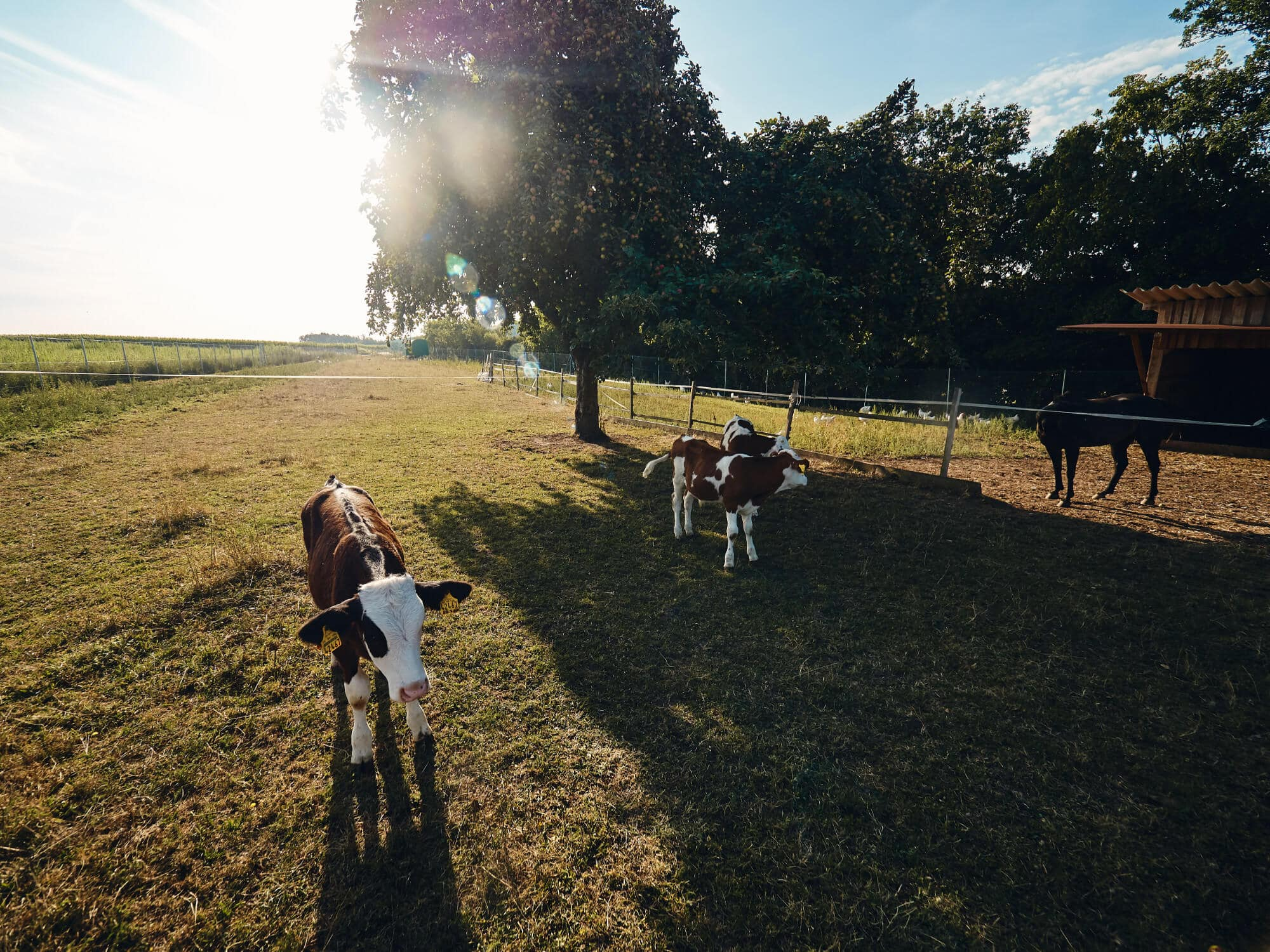 Freilandhaltung – Bioland-Bauernhof Fetz