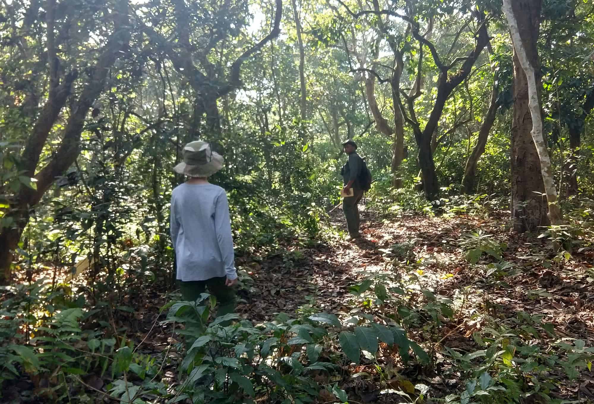 Walking tour in the forest with guide Chitwan