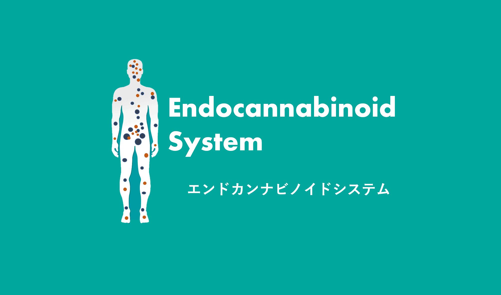 エンドカンナビノイドシステムとは