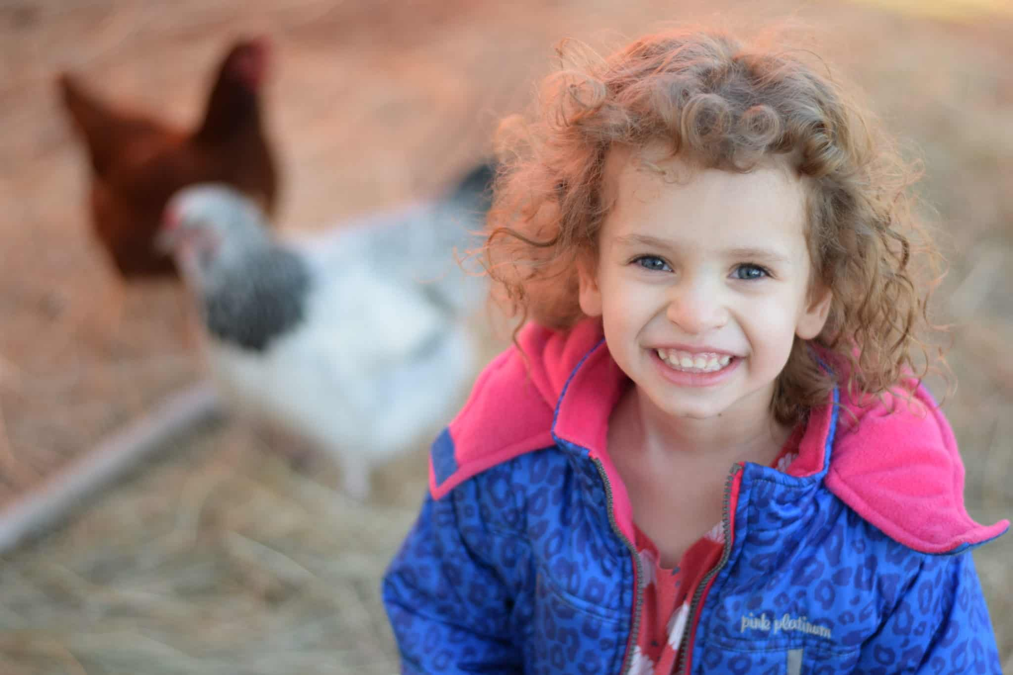 little girl helping in a chicken coop