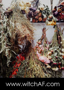 how-to-dry-herbs-for-witchcraft