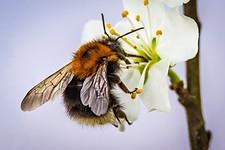 gratisprobe-pflanzen-saatgut-bienenfreundlich