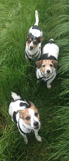 my dogs!