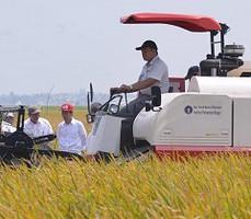 Presiden Jokowi menyaksikan panen padi varietas baru di Karawang, Jabar, Minggu (27/9)