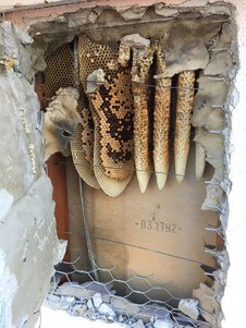 Bees are never pests unless they build a hive indoors or very near the home.