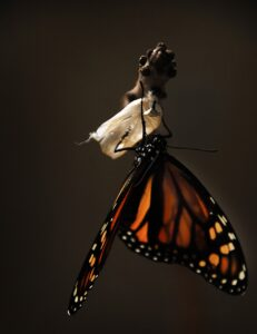 Monarch butterfly symbolizing the rime required for change