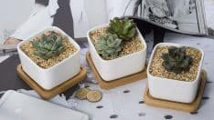 White Square Ceramic Plant Pot