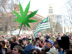 Huge Cannabis Festival Being Brewed in San Jose Fairgrounds