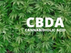 Hemp_Oil_Versus_CBD_Oil_RadiateCBD