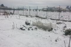 orto neve