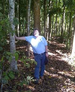 Philippines Mahogany Trees