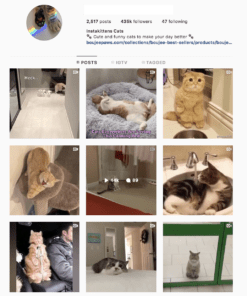 Buy Cats Lifestyle Instagram Accounts with Real Usernames and Engagements. See our Reviews on our Google Business Page. #1 Trusted Instagram Account Seller