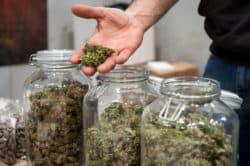 USA: Cannabis-Kampagne für die öffentliche Gesundheit