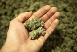 CDU-Politiker fordert Cannabis-Modellprojekte