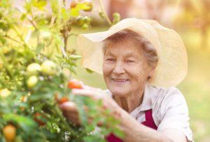 Mit Köpfchen kochen und Alzheimer vergessen