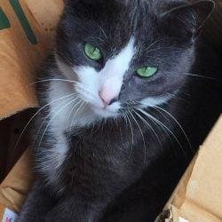 Lost Cat Aspley Brisbane QLD
