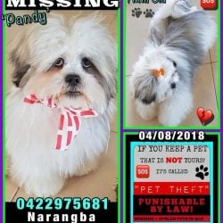 Missing and stolen pets QLD flyer