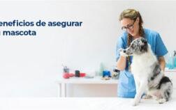 Beneficio de asegurar a tu mascota